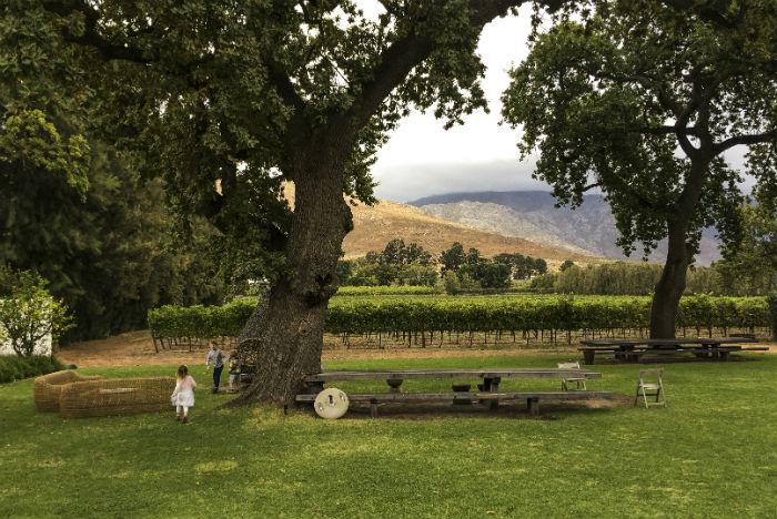 Pinotage é a uva típica sul-africana, resultado do cruzamento entre as clássicas cepas francesas Pinot Noir e a Heritage