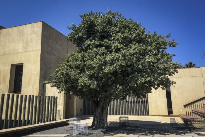Após mergulhar no obscurantismo do apartheid, visitante é devolvido à luz e convidado a passear pelos jardins