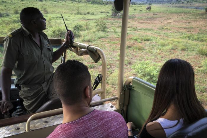 Guia explica comportamento dos animais na savana