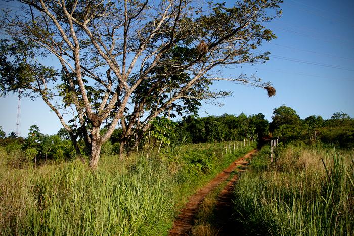 Suape restaurou 901 hectares de mata atlântica - Foto: Fernando da Hora/JC Imagem