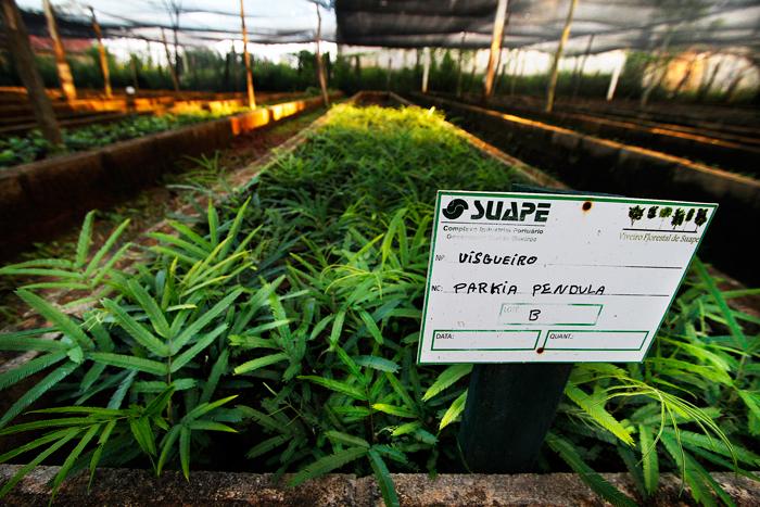 Viveiro florestal cultiva 73 espécies de plantas nativas - Foto: Fernando da Hora/JC Imagem