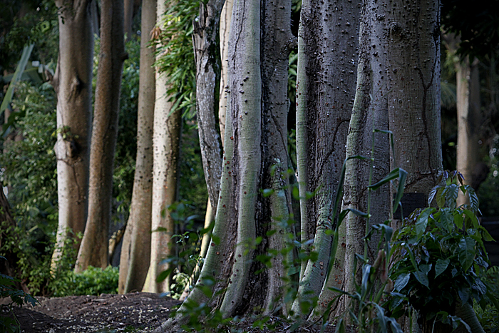 Governo de Pernambuco editou lei permitindo supressão vegetal de 686 hectares em Suape - Foto: Fernando da Hora/JC Imagem